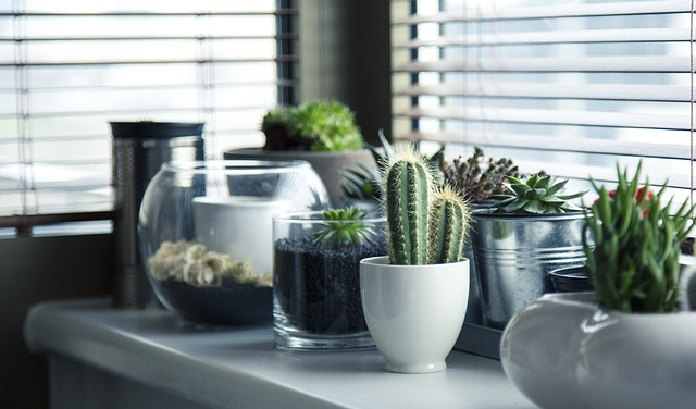Cactus plants you can add after you declutter your living room.