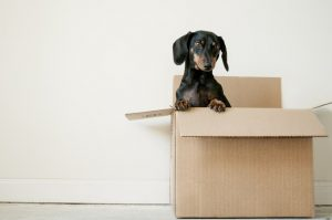 Moving box with a dog